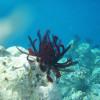 Welche Unterwasser Digitalkamera kaufen