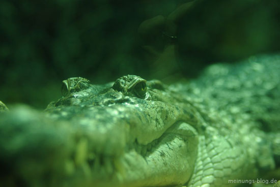 krokodil-zoo